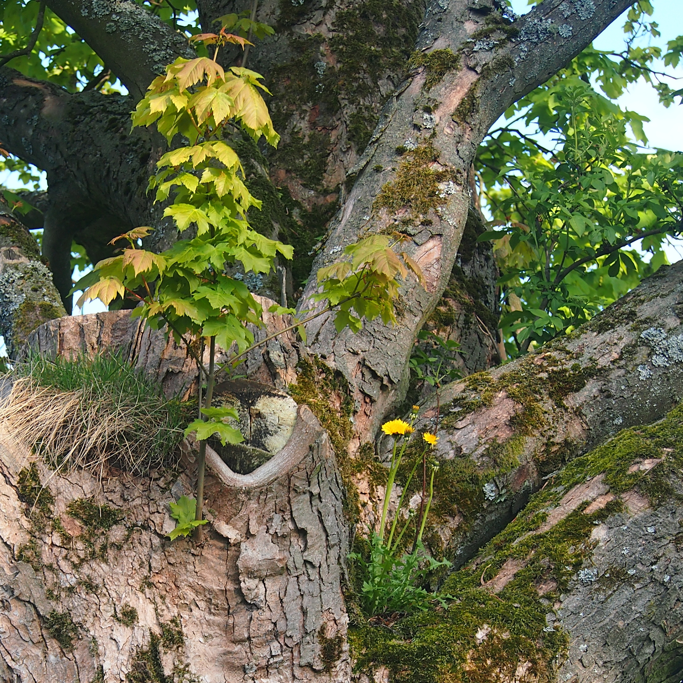 aecco_tree_plants.jpg