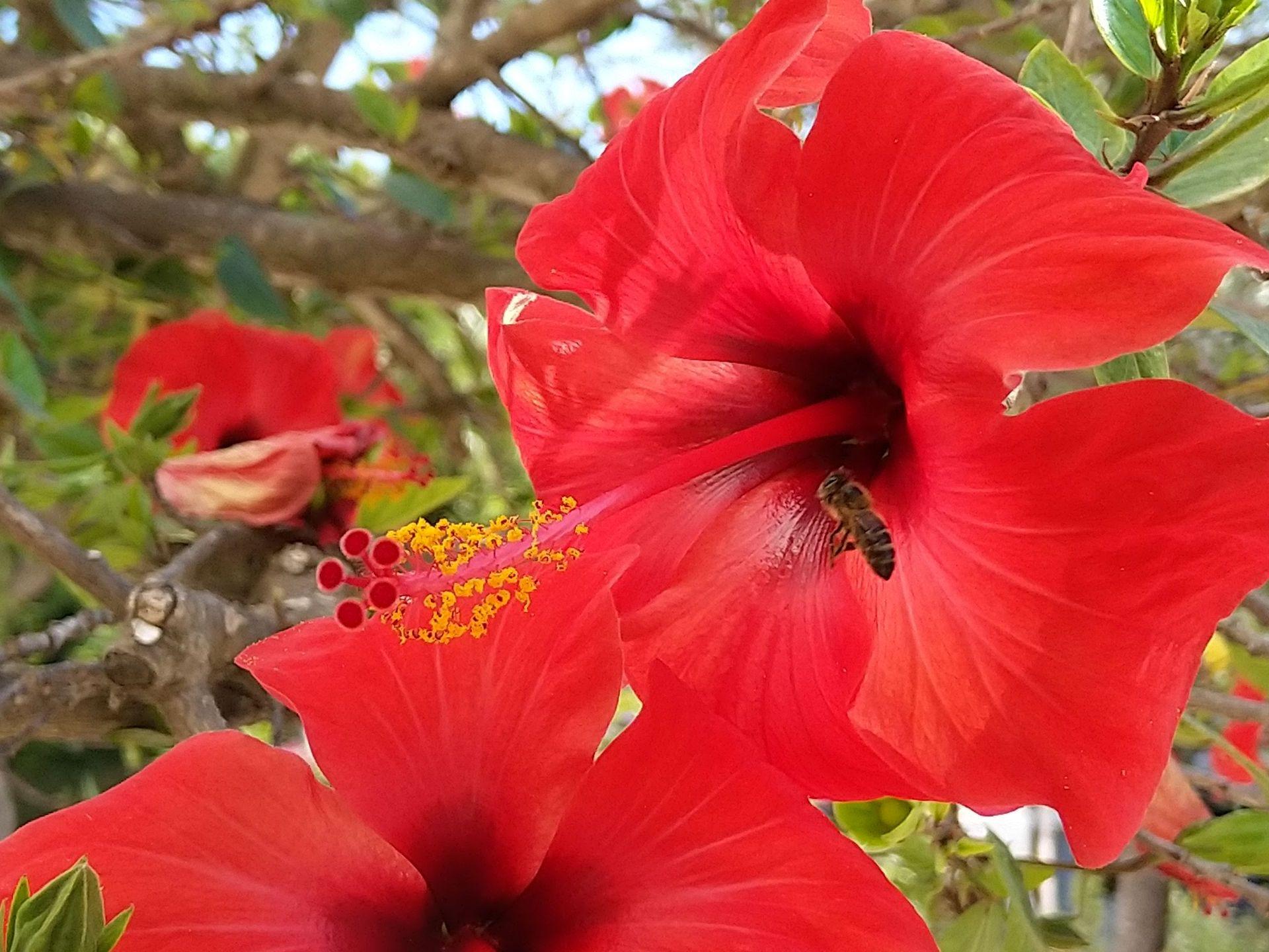 aecco_flowerbee_1920x1440px.jpg