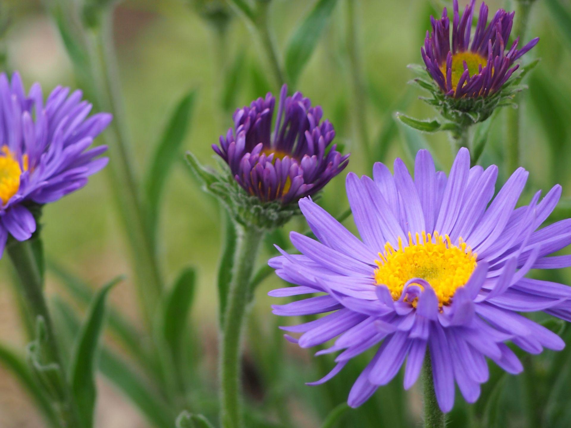aecco_plantflower_1920x1440px.jpg